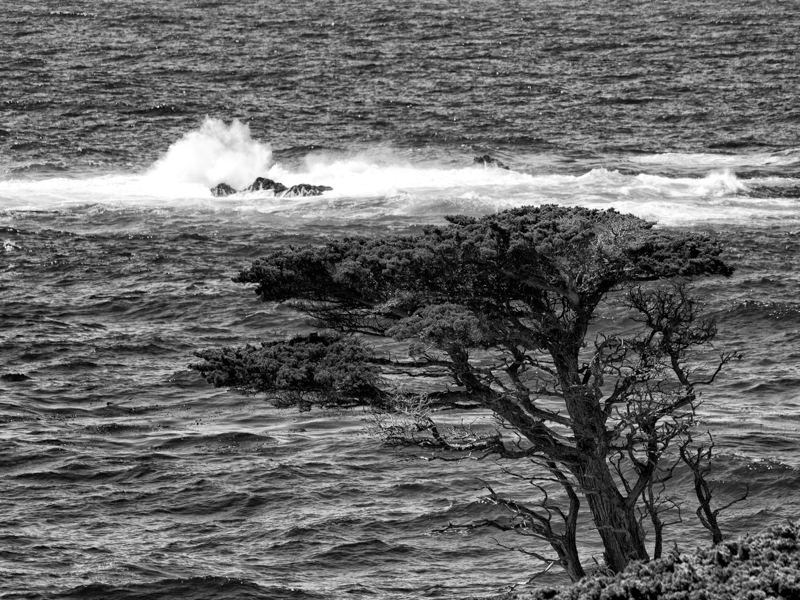 Cali: Lone Cypress Tree at Point Lobos