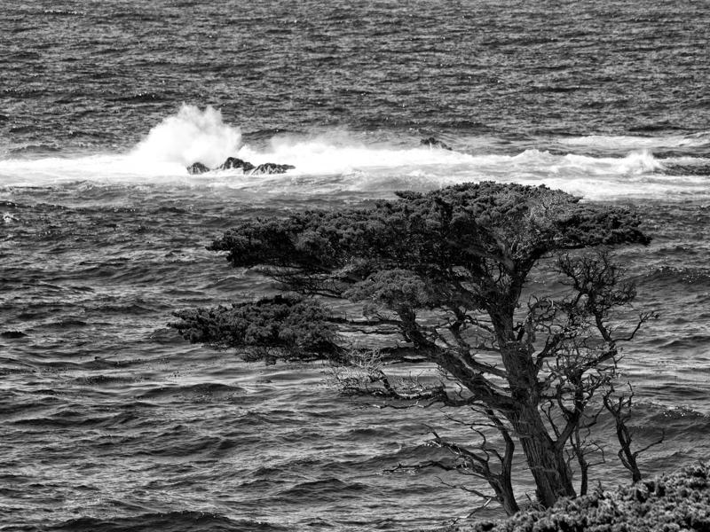 Cali: Lone Cypress Tree at Point Lobos