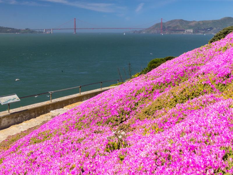 Cali - Golden Gate Bridge from Alcatraz