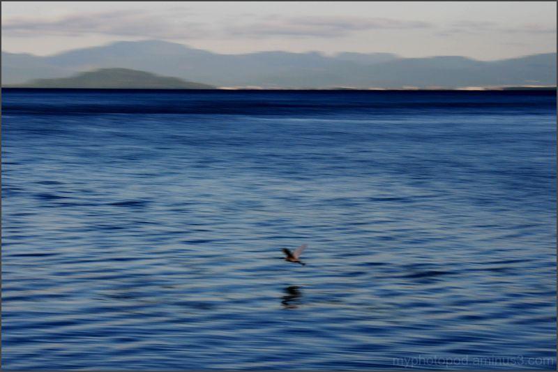 A waterfowl flies biwa LEICA