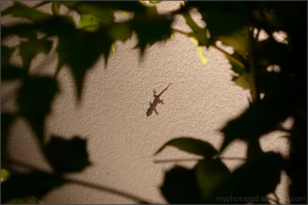 A small gecko In a green frame night LEICA