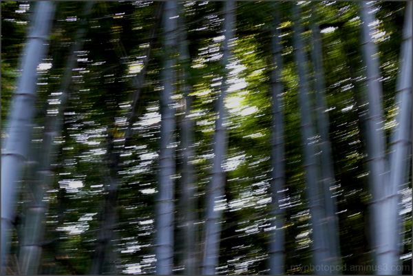 Wind to shake bamboo LEICA
