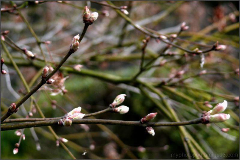 blooms soon LEICA