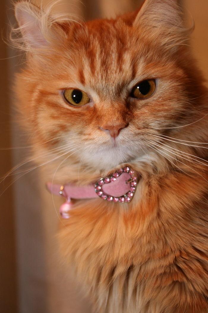 kira animal cat