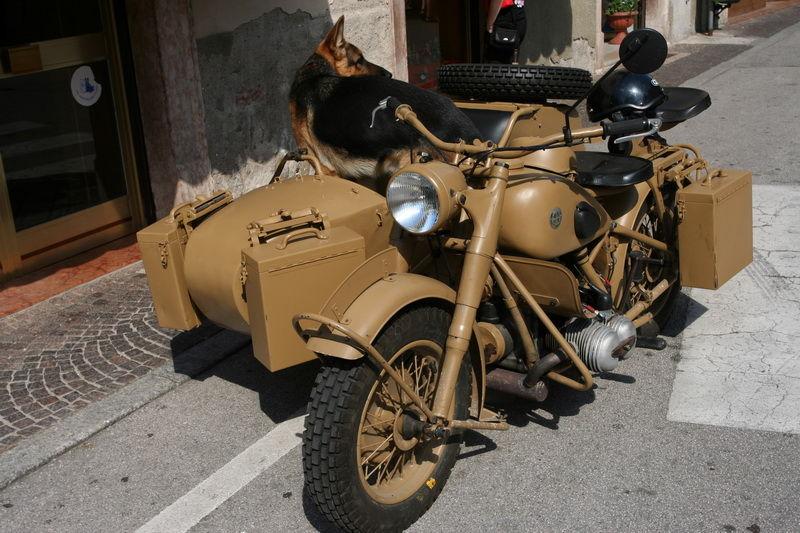 dogs bike bmw