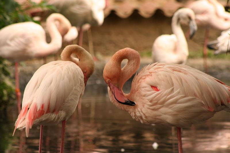 birds animal