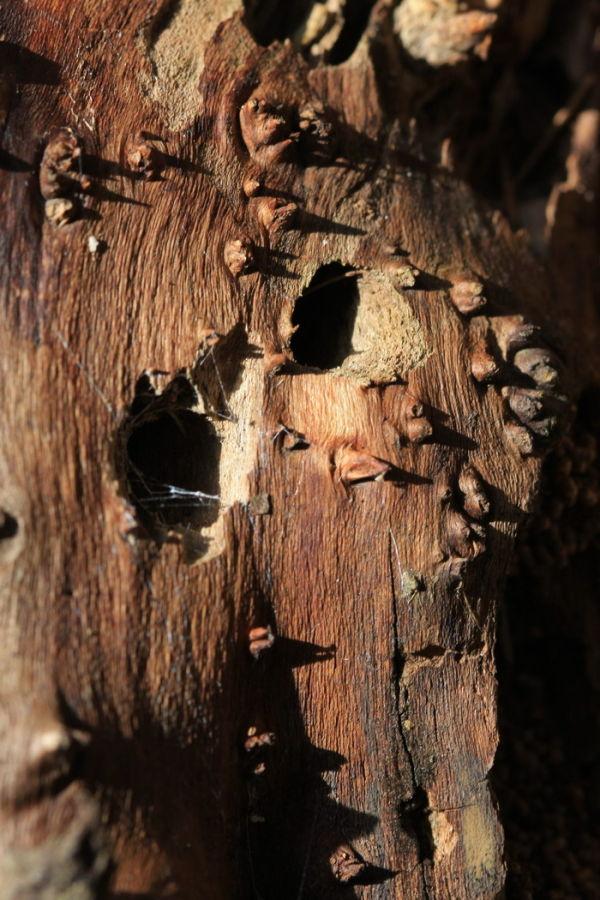 Holes & Thorns