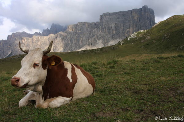 Postcard from Dolomites