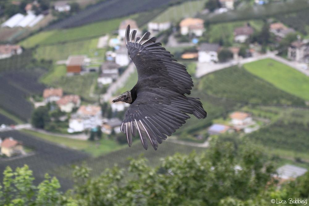 Flying Over Tirolo