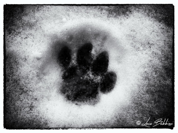 Cat Footprint