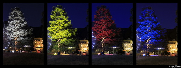 Four Colors Tree