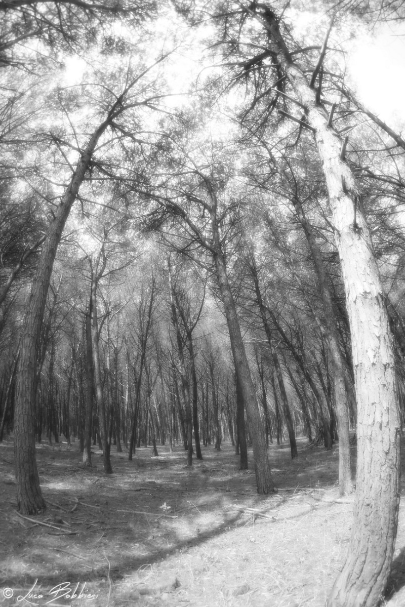 Distorted Trees