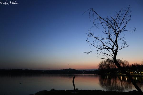 Tree in the Dusk