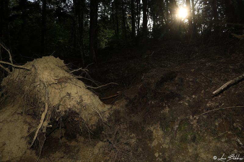 Light On Roots