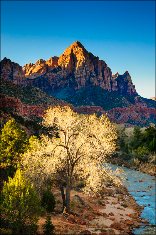 Zion in Spring