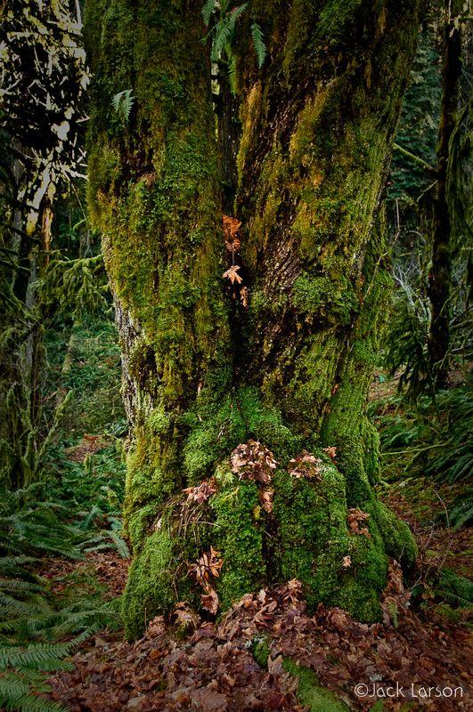 OldGrowthForest