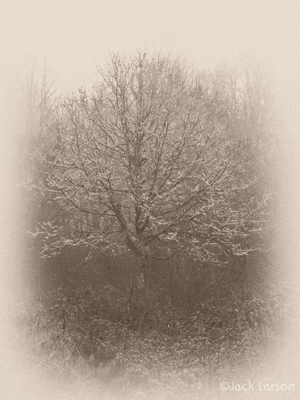 TreeinSepia