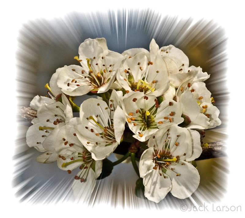 PlumBlossomZoom
