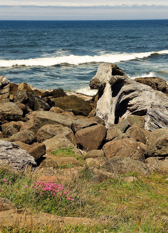 Flowers,Rocks,Wood,Sea