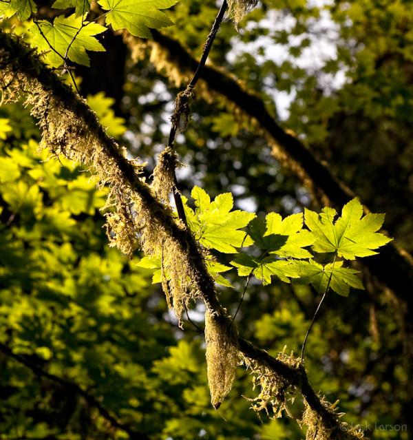 Leaves&Moss