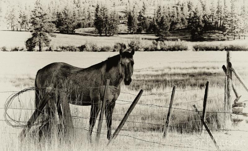 HorseCountry
