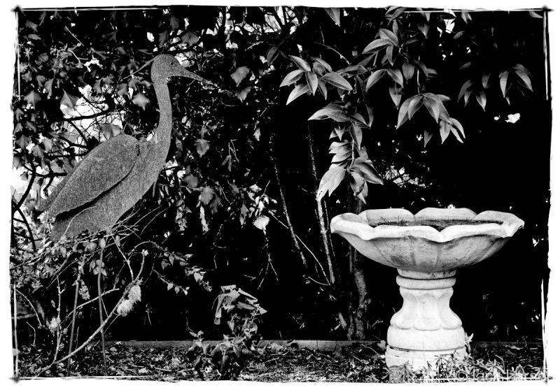 Heron&Birdbath