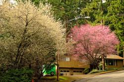 BloomingTrees