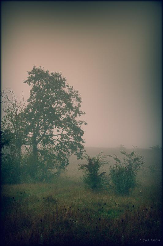 Foggy HDR#5