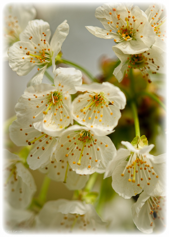 WonderfulBlossoms