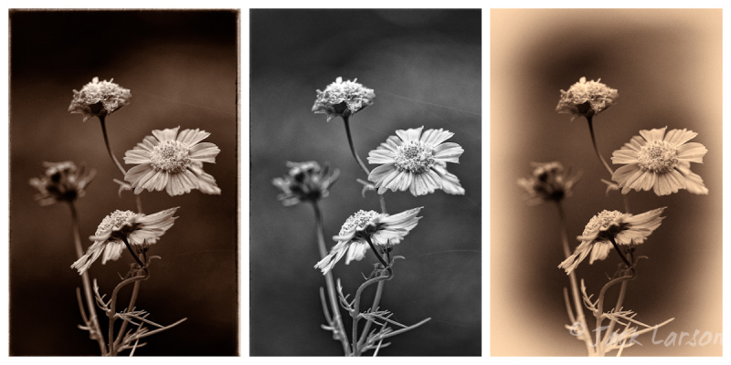 Monochrome Trio