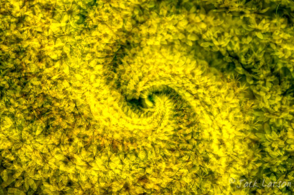 YelSpiral