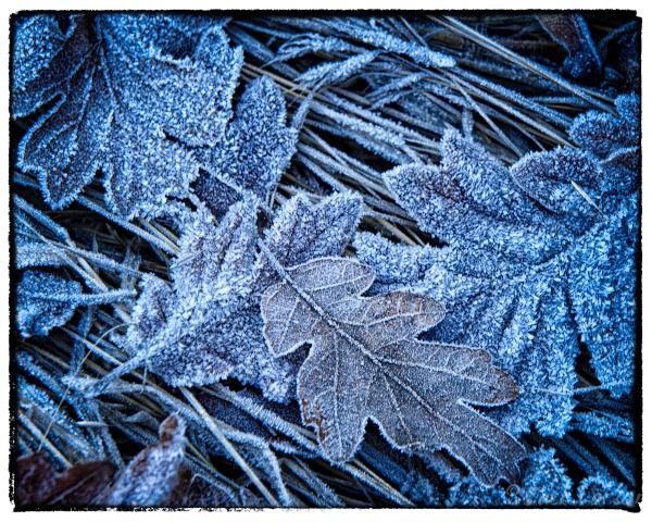 Frost,NoSnow