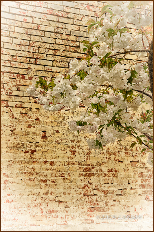 Spring in Harrisburg