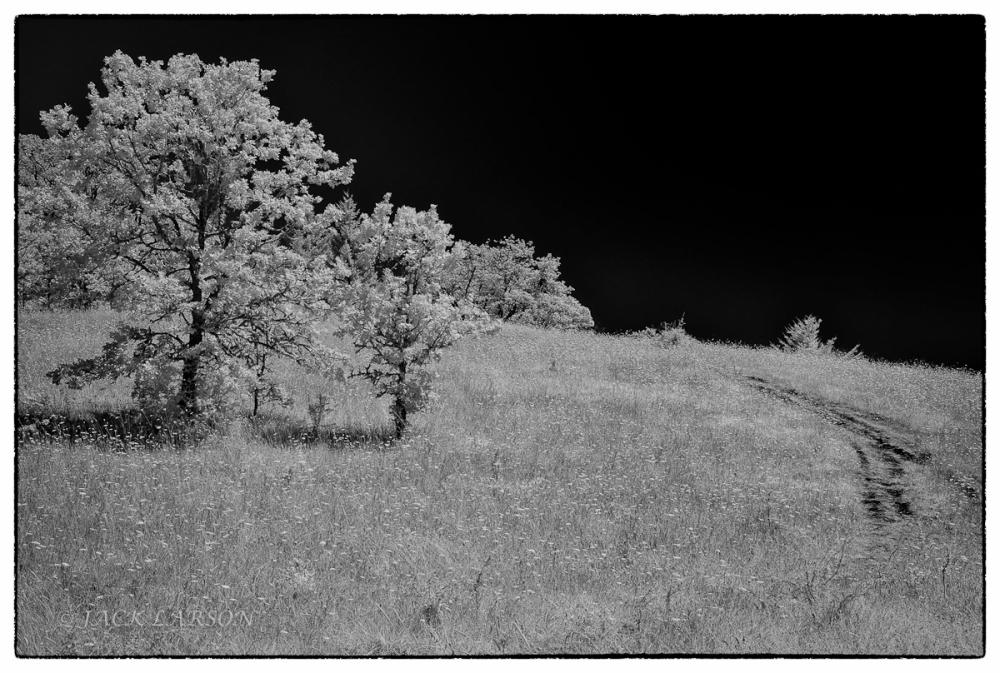 Trees&Trail