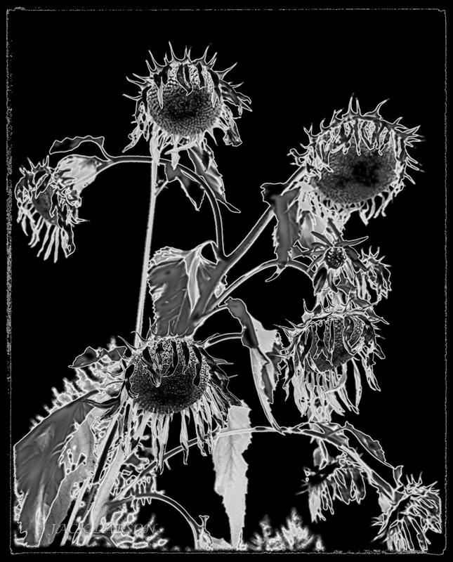 SunflowerIR&Sol