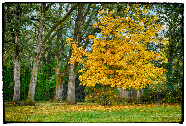 AutumnGold