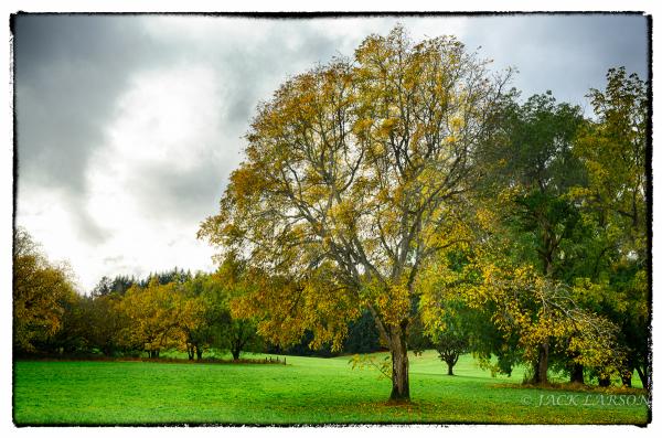 AutumnCreative