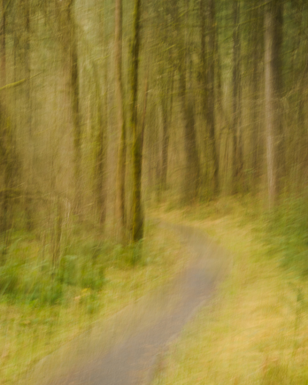 Into the Forest Impression