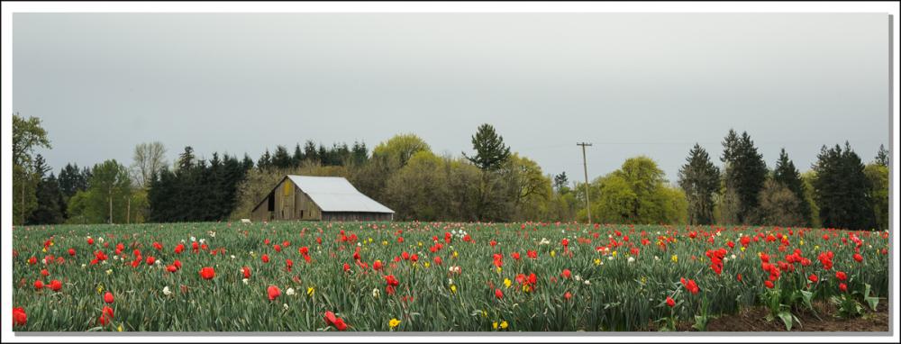 CountrysideSpring