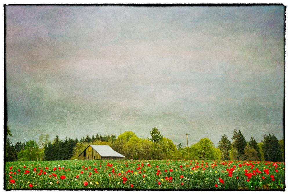 CountrysideSpringtextures