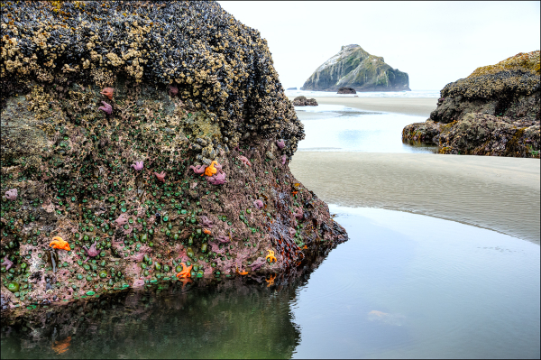 Low Tide (Face Rock)