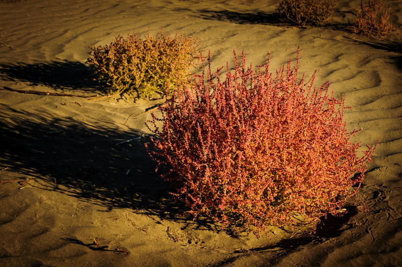 Desert Color