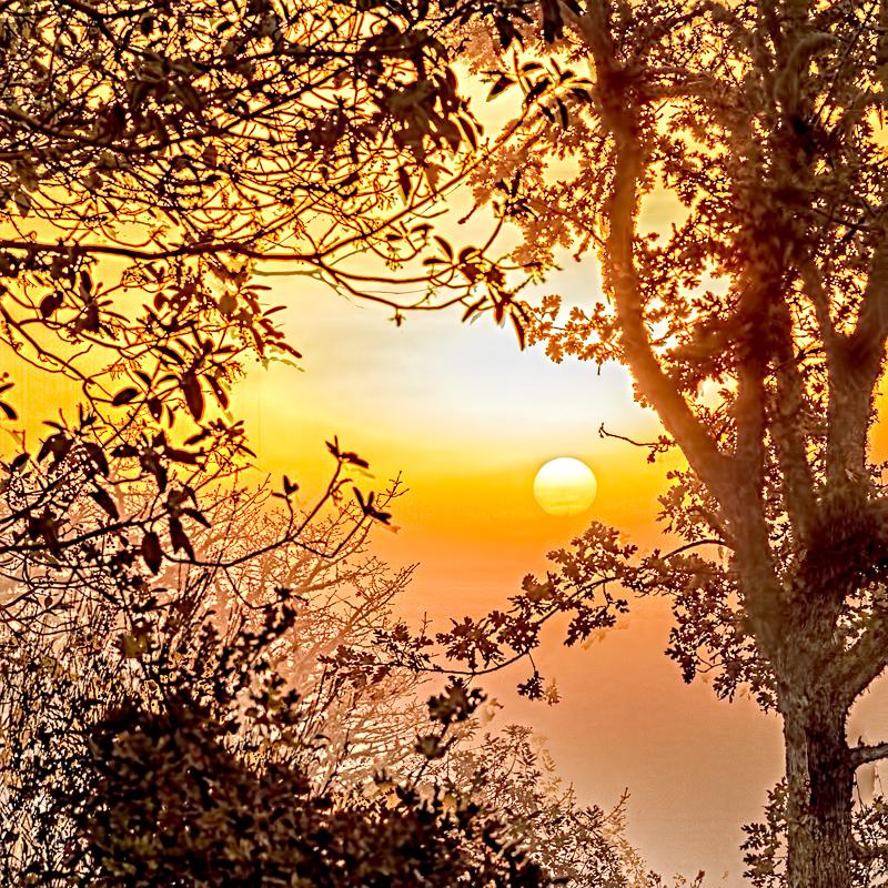 Square Format Sunrise