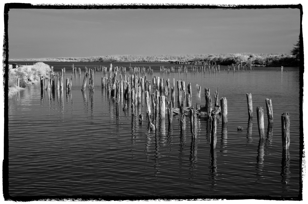 Coquille River Pilings
