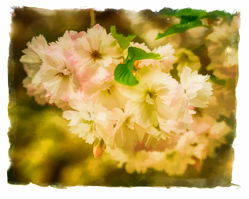 Spring Flowers #3