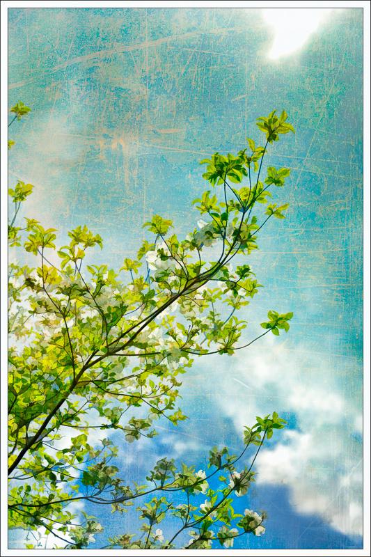 Spring Flowers #5