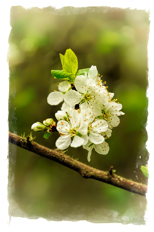 Spring Flowers #10