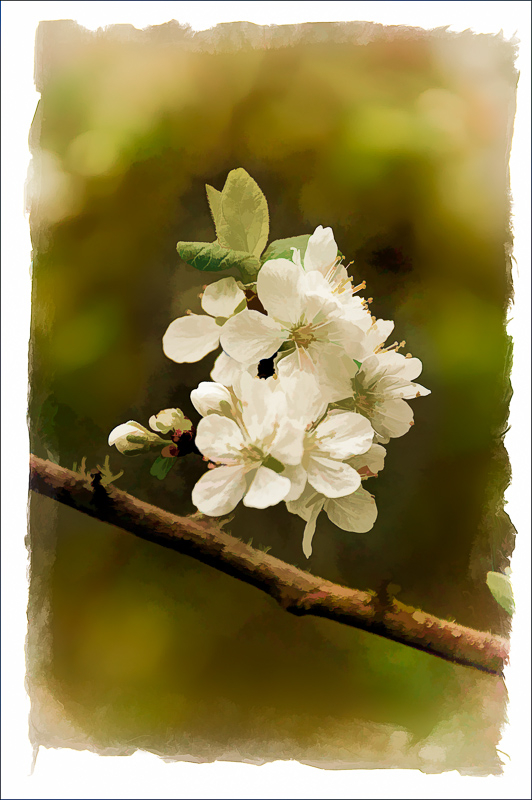 Spring Flowers #11