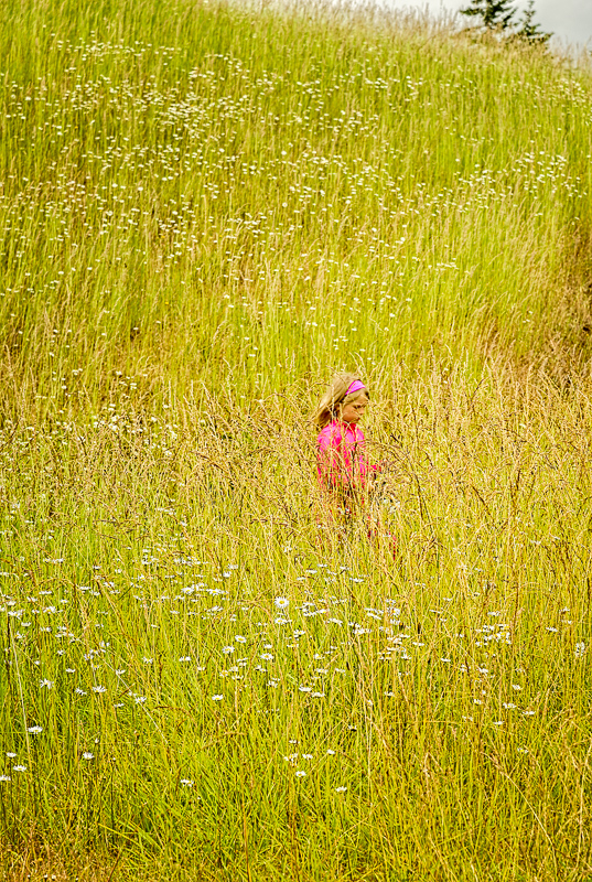 In the Tall Grass