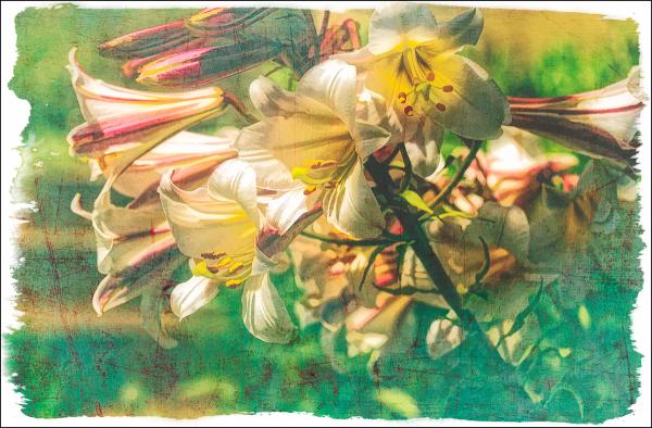 Photomorphis Floral Preset